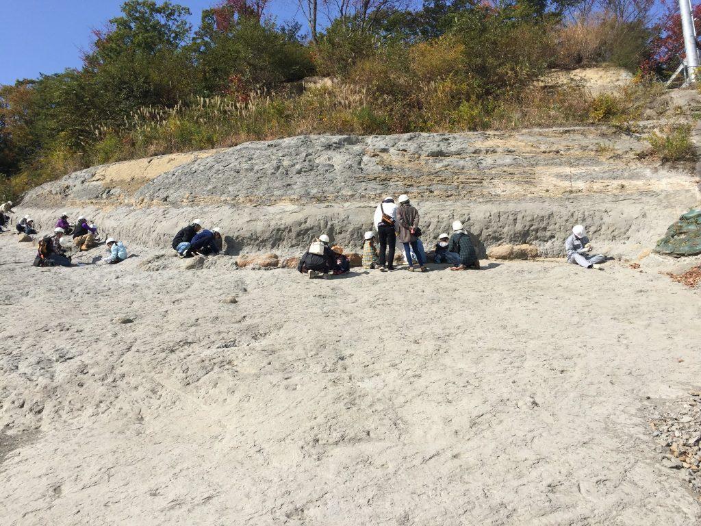 ammonite-center1