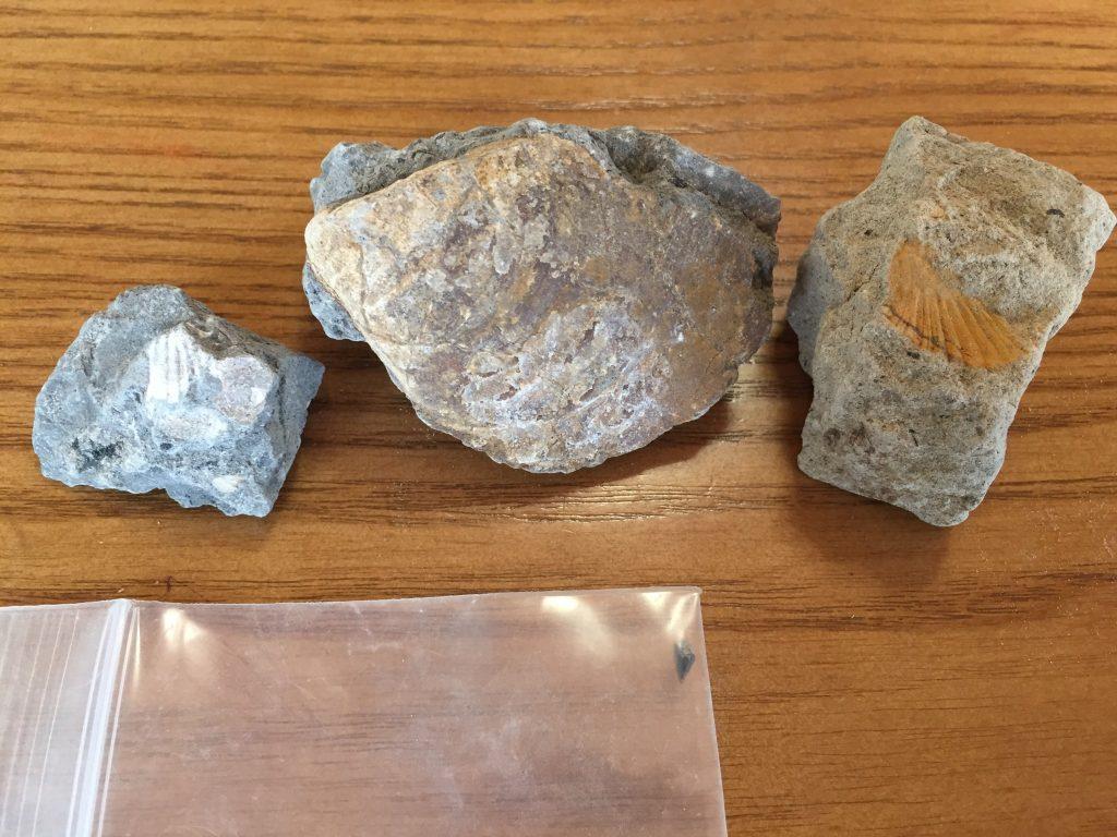 ammonite-center2